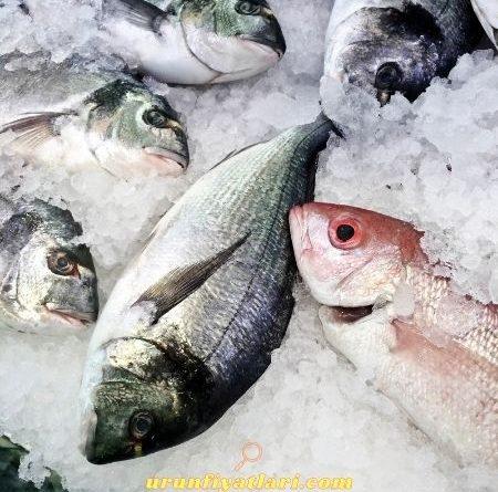 Bim Balık Fiyatları